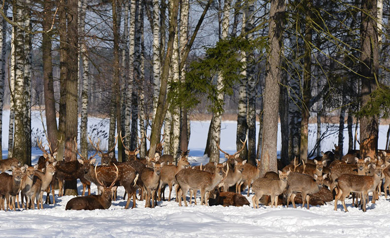 """National Park """"Elk Island"""", Moscow, Russia"""