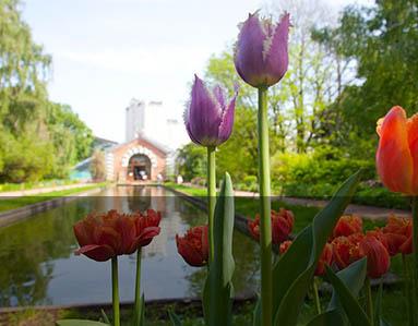 Apothecary Garden, Moscow, Russia